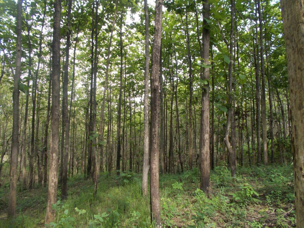 Teak timber | African Teak wood | Teak wood for sale
