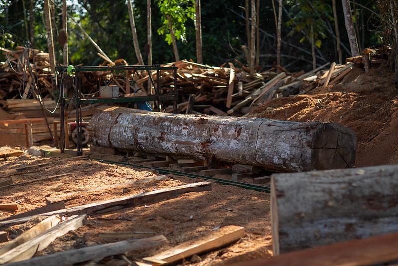 Merbau Wood price