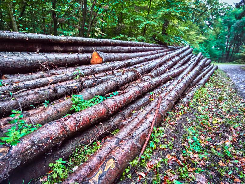 Sal wood India