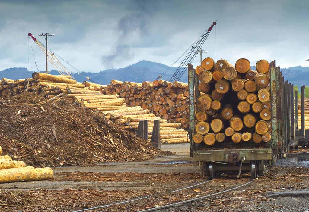 Wooden logging